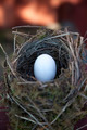 Detail of bird eggs in nest - PhotoDune Item for Sale