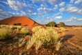 Desert landscape - PhotoDune Item for Sale