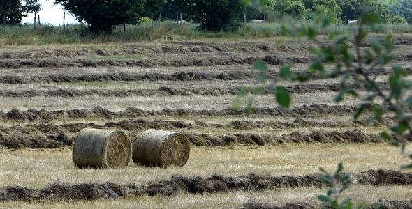 Bales Hay in Farm Field 3