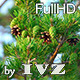 Pine Tree - VideoHive Item for Sale