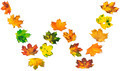 Letter W composed of autumn maple leafs - PhotoDune Item for Sale