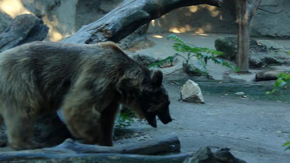Bear At His Cave