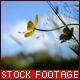 Yellow Flower - VideoHive Item for Sale