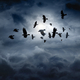 Flying ravens - PhotoDune Item for Sale