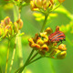 Green Plant and Flying Insect - VideoHive Item for Sale