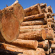 Timber Wood Logging Industry Lumber Raw Logs Stacked - PhotoDune Item for Sale