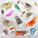 Butterfly Background - PhotoDune Item for Sale