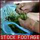 Old Woman Hands - VideoHive Item for Sale