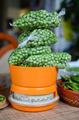 Peas on the scale - PhotoDune Item for Sale