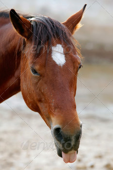cute horse on the ranch