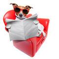 dog newspaper - PhotoDune Item for Sale