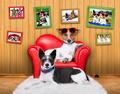 love couple sofa dogs - PhotoDune Item for Sale