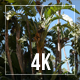 Tropical Forest - VideoHive Item for Sale