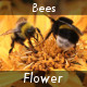 Bees On A Flower - VideoHive Item for Sale