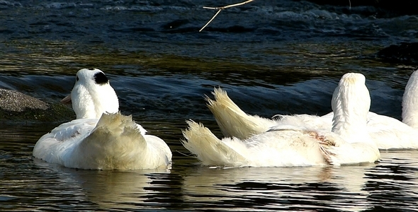 Ducks 10