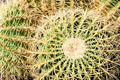Close Up Cactus (1) - PhotoDune Item for Sale