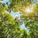 sun shining through the treetops - PhotoDune Item for Sale
