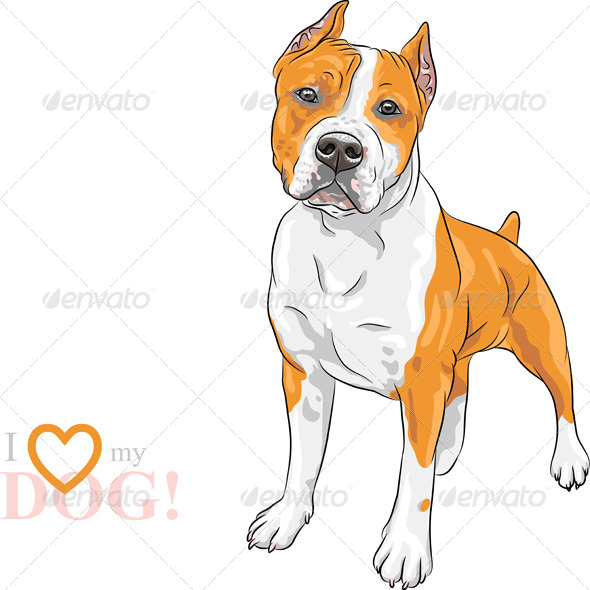 GraphicRiver American Staffordshire Terrier 8635149