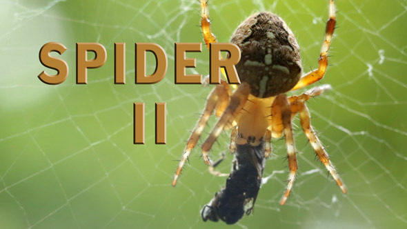 Spider Pack 2