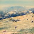 Winter Sheep Vintage - PhotoDune Item for Sale