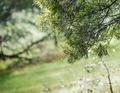 Rain Through Trees - PhotoDune Item for Sale