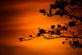 tree branches on orange background - PhotoDune Item for Sale