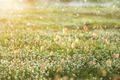 Flower grass in the garden. - PhotoDune Item for Sale