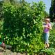 Woman in vegetable garden - PhotoDune Item for Sale