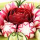 cucumber radish and beet decorated salad like flower closeup - PhotoDune Item for Sale