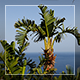 Palms And Sea View - VideoHive Item for Sale
