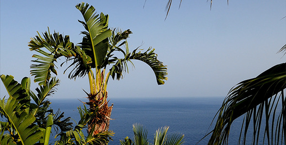Palms And Sea View