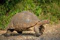 Mountain tortoise - PhotoDune Item for Sale