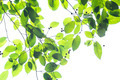 Green leaf on white - PhotoDune Item for Sale