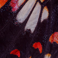 Butterfly wing texture, close up of detail of butterfly wing for - PhotoDune Item for Sale