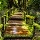 Beautiful rain forest at ang ka nature trail  - PhotoDune Item for Sale