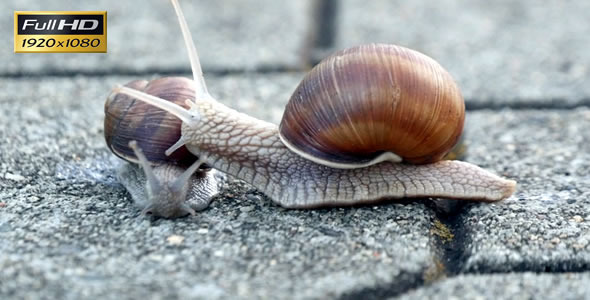 Snails On the Pavement