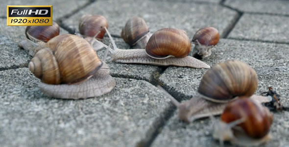 Snails On The Pavement 2