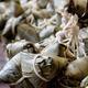 Chinese Rice Dumplings  - PhotoDune Item for Sale