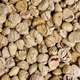Background of peeled dried chestnuts - PhotoDune Item for Sale
