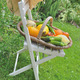 vegetable basket on a chair  - PhotoDune Item for Sale