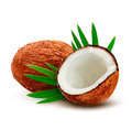 Coconut with palm leaves. - PhotoDune Item for Sale
