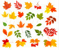 Set of colorful autumn leaves. - PhotoDune Item for Sale