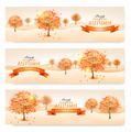 Autumn background with colorful leaves and trees - PhotoDune Item for Sale