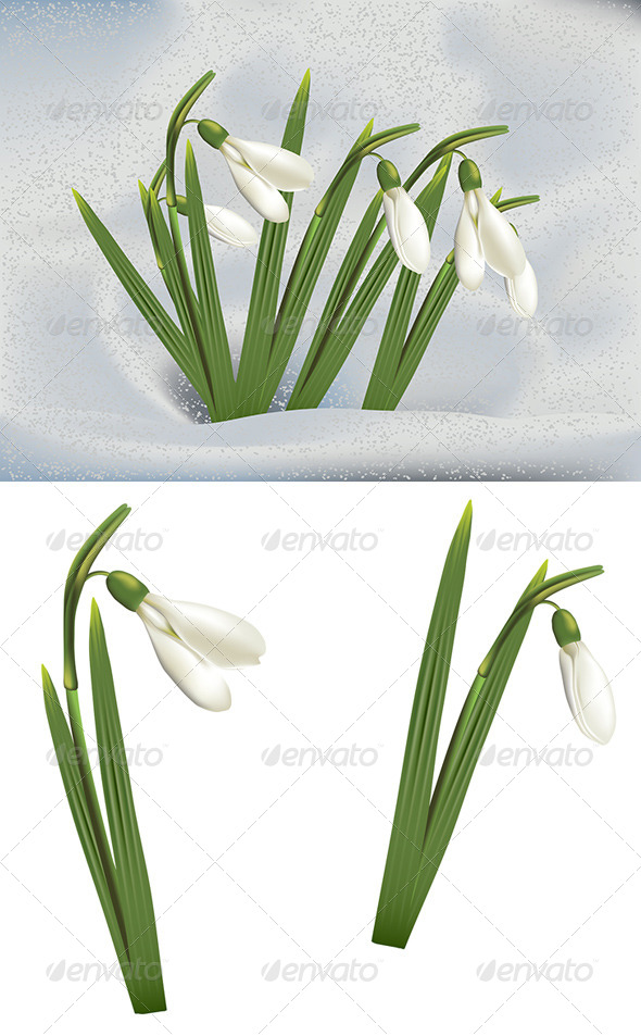 GraphicRiver Snowdrops in Snow 8661314