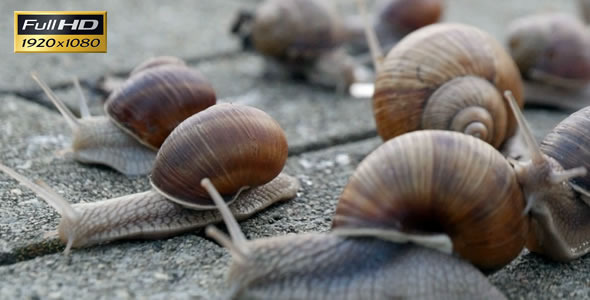Snails On the Pavement 4