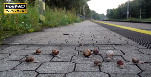 Snails On the Pavement 9