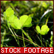 Clover - VideoHive Item for Sale