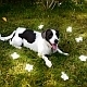 Cute Dog Between Flowers - VideoHive Item for Sale