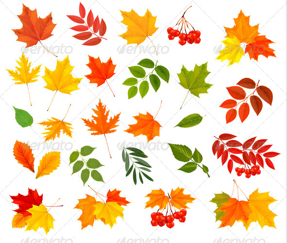 GraphicRiver Set of Colorful Autumn Leaves Vector Illustration 8677086