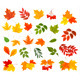 Set of Colorful Autumn Leaves. Vector Illustration - GraphicRiver Item for Sale